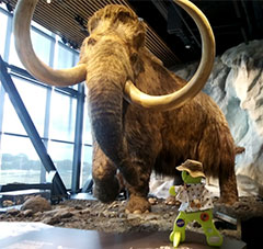Timmy meets the Wooly Mammoth at the Bell Museum, Saint Paul, MN